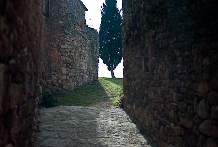Siurana-Tree-Spain-2008